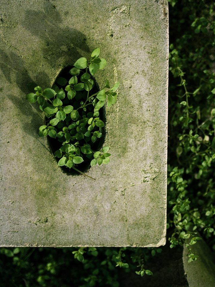 Grüne Wunderwelt